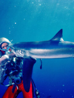 Playing with Sharks Documentary Acquired by National Geographic