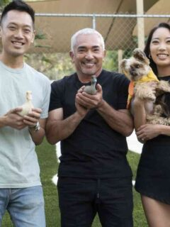 Cesar Millan Returns to TV in Better Human Better Dog